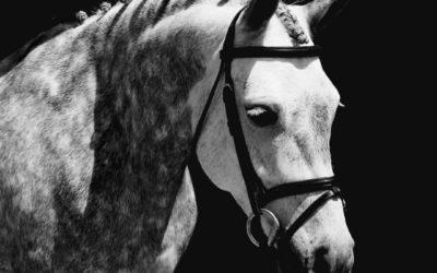 Shenandoah Sea Lily – Welsh Pony Mare