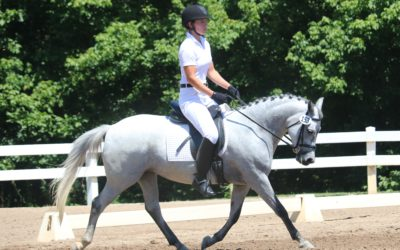 Shenandoah Sea Lily – Welsh Pony Mare