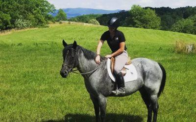 Denny – quarter horse gelding