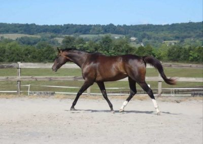 breeding-thoroughbred-horse