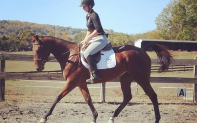 Bea – thoroughbred mare