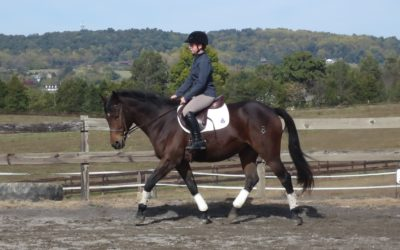 Tatti – warmblood cross mare