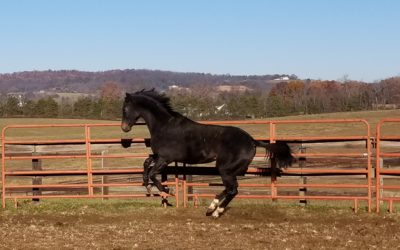 Wildjustenuff – thoroughbred gelding