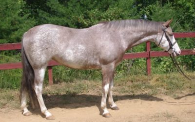 Color Chip – APHA mare