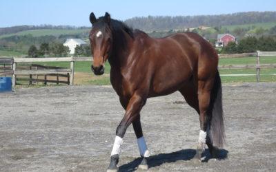 Can't Escape Her Faith – AQHA mare