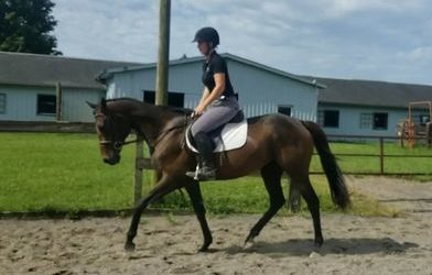 Belle – thoroughbred mare