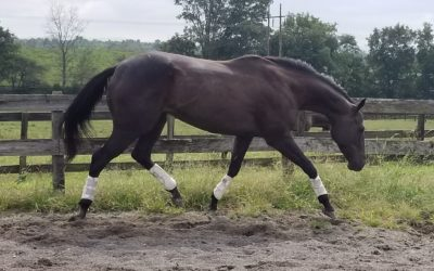 That Tricky Lady – OTTB mare