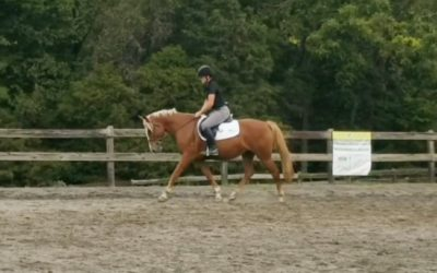 Dolly – QH cross mare