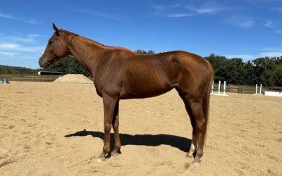 Heavenly Hattie – OTTB mare